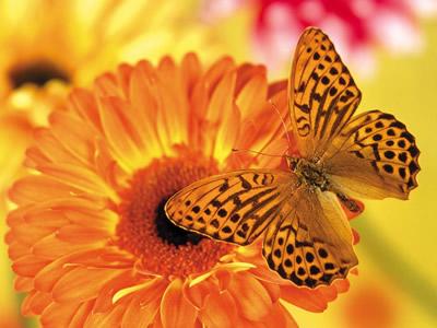colores positivos amarillo y naranja
