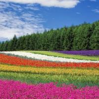 psicologia del color en sitio web